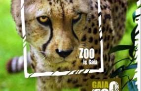 GaiaZOO cheeta