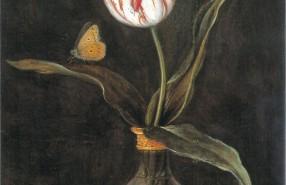 Balthasar van der Ast_Tulpe Sommerschoen