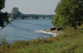 Te grazen genomen-Stalberg Hamert- Harry Bussink - Limburgs Landschap