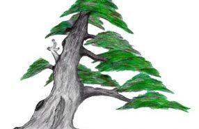 bonsaivereniging kleur