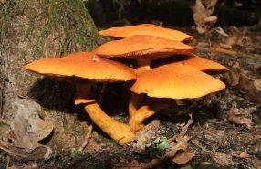 herfst-luuk-daamen-limburgs-landschap
