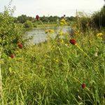 Rivierpark Baarlo-Blerick