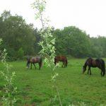 Lang Leve Limburg! - 37 km