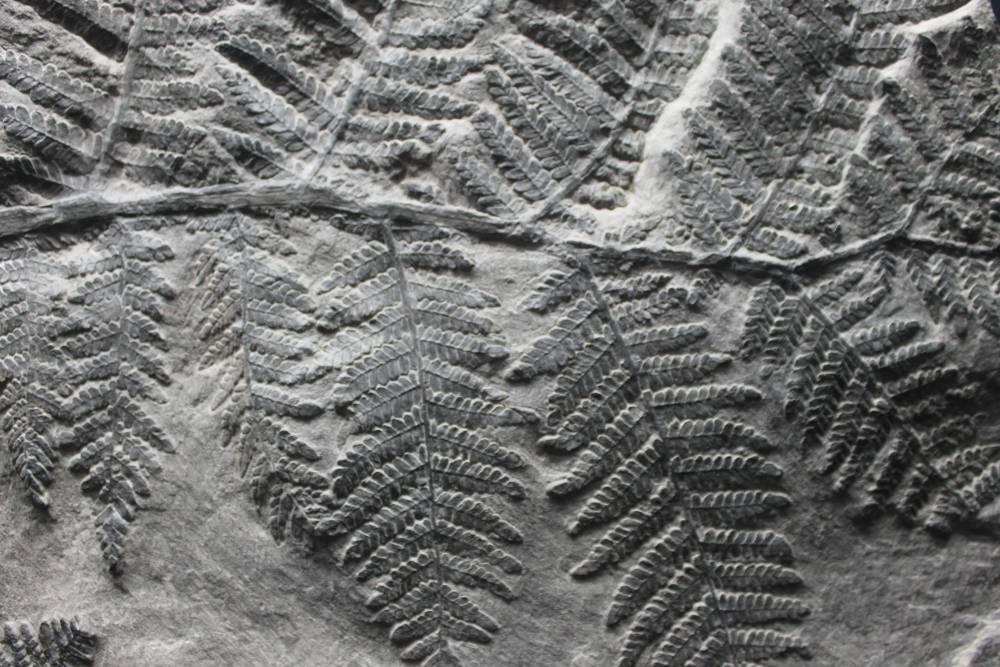 Dating dinosaurussen fossielen One Love matchmaking beoordelingen