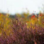 Natuur in Limburg: Ga naar buiten en verken deze 5 plekken