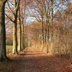 Coronaproof: 5 date ideeën in Limburg