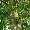 Herfstvakantie: Nestkastjes in elkaar zetten