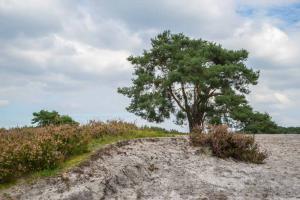 Brunssummerheide 29 - fotograaf Cor Niemantsverdriet