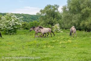eijsder beemden paarden-5