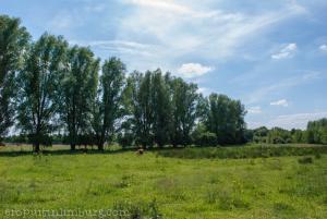 schinveldse bossen (4 van 4)